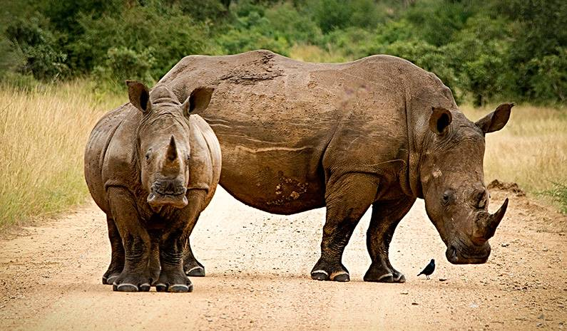 Ayúdanos A Salvar A Los Rinocerontes